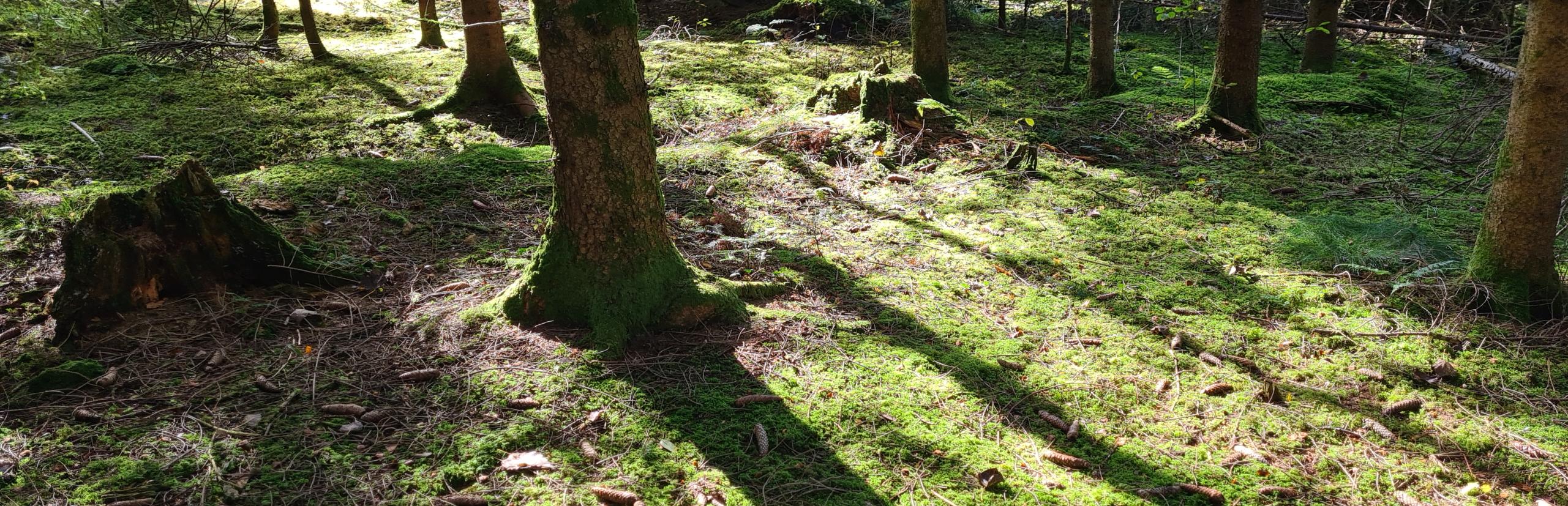 Trauerfeier mit Christian G. Binder in einem Wald in München